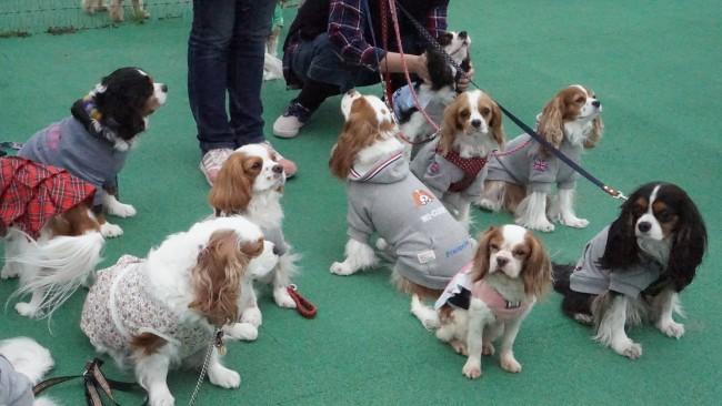 DOG DEPT木更津オフ会でのテトラくんとすばる