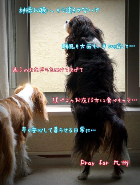 Pray for 九州