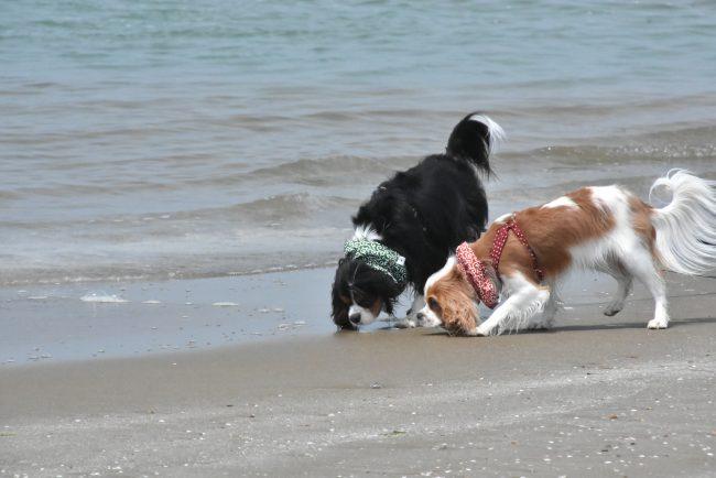 千里浜なぎさドライブウェイ 犬