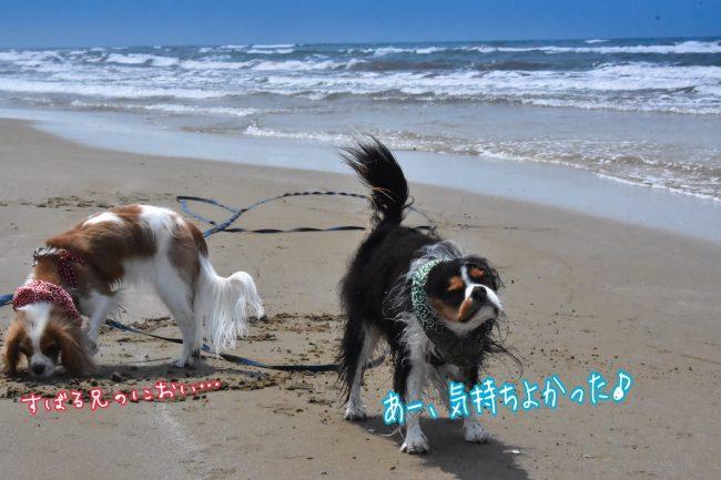 千里浜なぎさドライブウェイ キャバリア