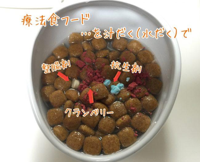 ストルバイト 犬 食事 フード 療法食 クランベリー 抗生剤