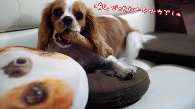 ペットステージ Petstages ウッディー タフ スティック ウッドスティック DOGWOOD Sticks 噛むオモチャ デンタルケア 犬のおもちゃ