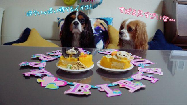 キャバリア 犬ケーキ 誕生日