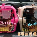 犬と羽田空港