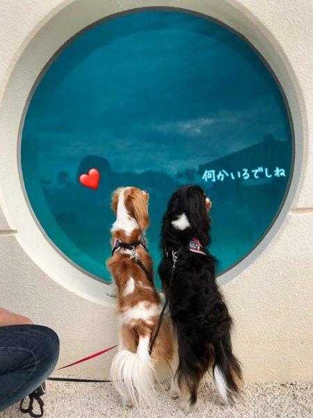 イルカとキャバリア 海洋博公園