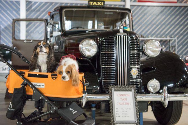 那須クラシックカー博物館 ロンドンタクシー キャバリア