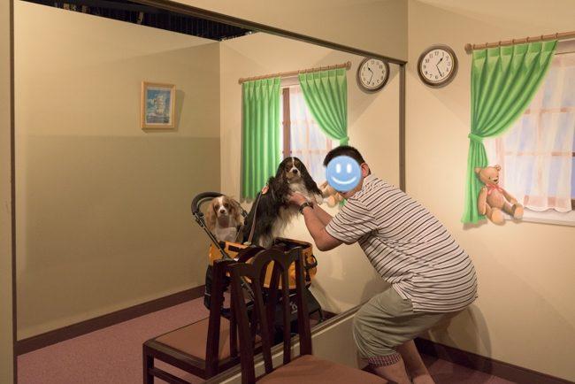 那須とりっくあーとぴあ トリックアート迷宮館 犬 キャバリア ペット