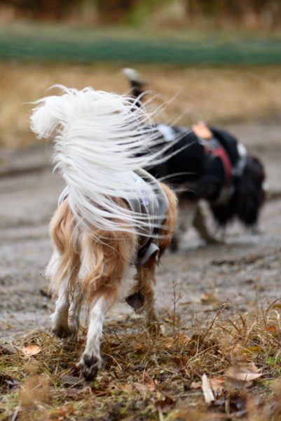 愛犬とトレッキング 茂来山