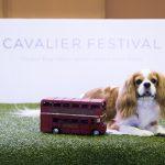 キャバリアフェスティバル cavalier festival