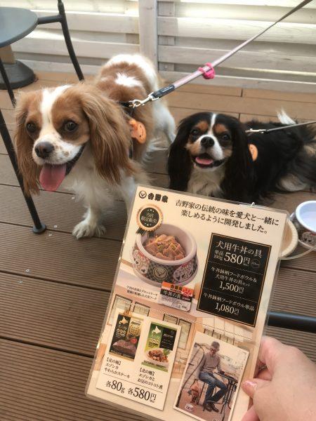 吉野家 川口柳崎店 犬 メニュー