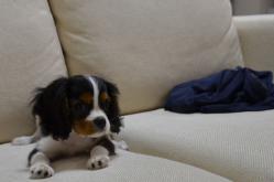 ソファーの上のすばる