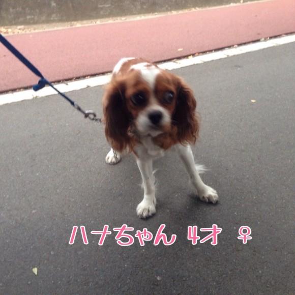 fc2blog_20140827005420907