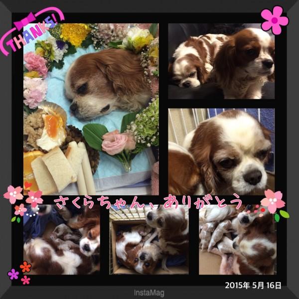 fc2blog_20150523181600b83