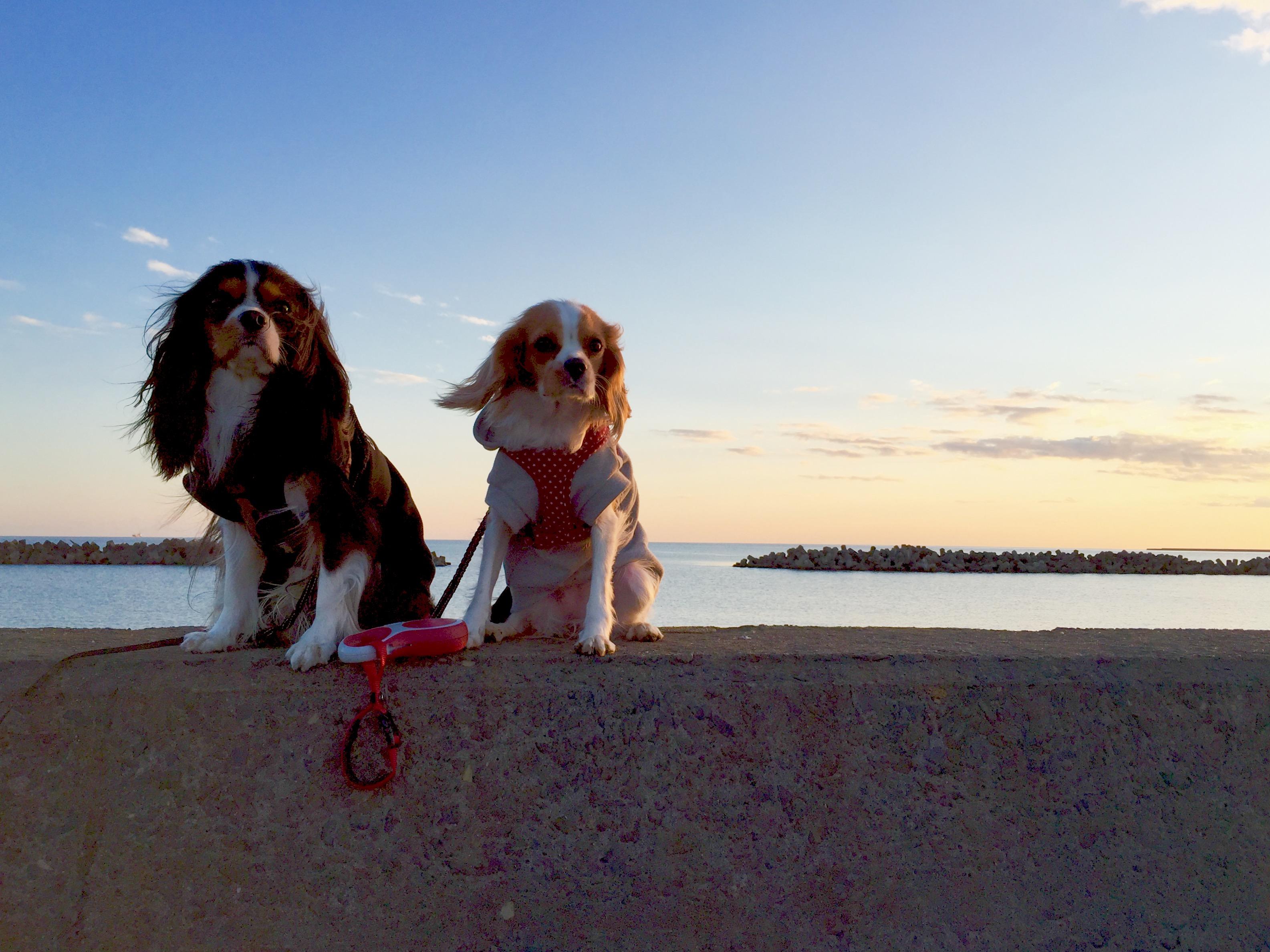 大晦日のお散歩納めはパパ実家の周辺で。土手沿いに海岸沿い、楽しく歩きました。