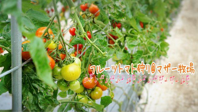 マザー牧場 フルーツトマト狩り