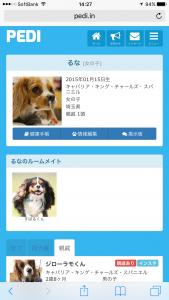 PEDI ペディ 犬の親戚探し