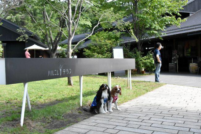 犬連れ軽井沢旅行 ハルニレテラス キャバリア