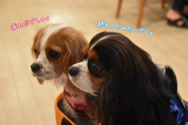 旧軽井沢森ノ美術館 トリックアート美術館 軽井沢犬旅行 キャバリア