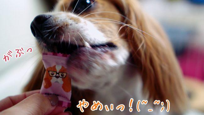 キャバリアキャンディ 飴 個装パッケージ キャバリア