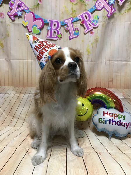 キャバリア 誕生日