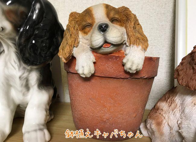 居眠り子犬 キャバリアスパニエル