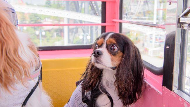 愛犬と一緒に富士急ハイランド