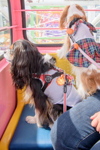 愛犬と富士急ハイランド
