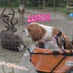 那須どうぶつ王国 ペット 犬 キャバリア