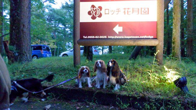 山中湖ロッヂ花月園 キャバリア