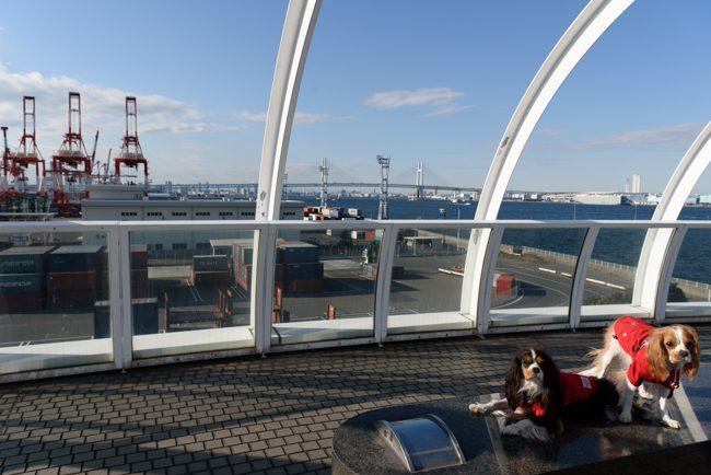 横浜港シンボルタワー キャバリアDAY