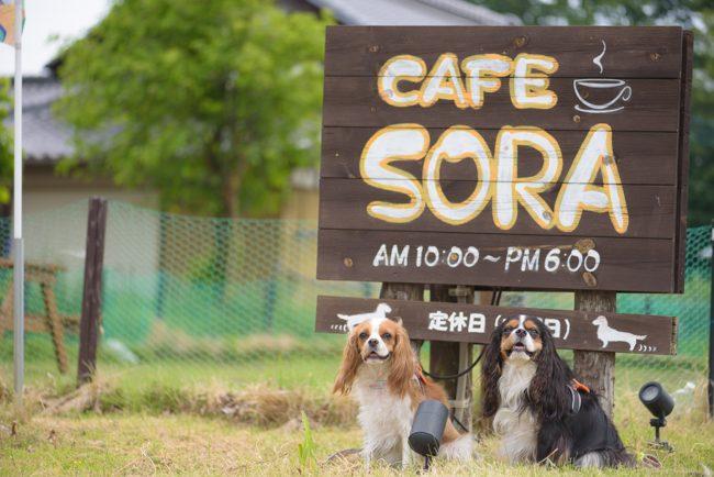 cafe sora カフェレストラン ソラ