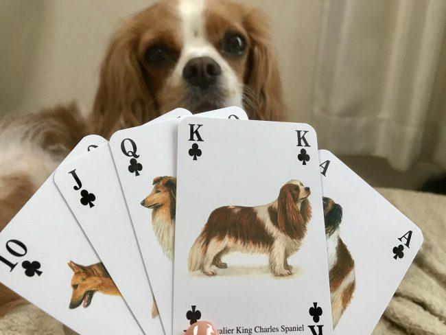 Dog Trump イヌトランプ