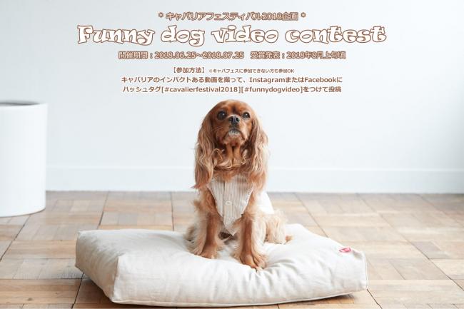 Cavalier Festival Funny dog video contest キャバリアフェスティバル2018 動画コンテスト
