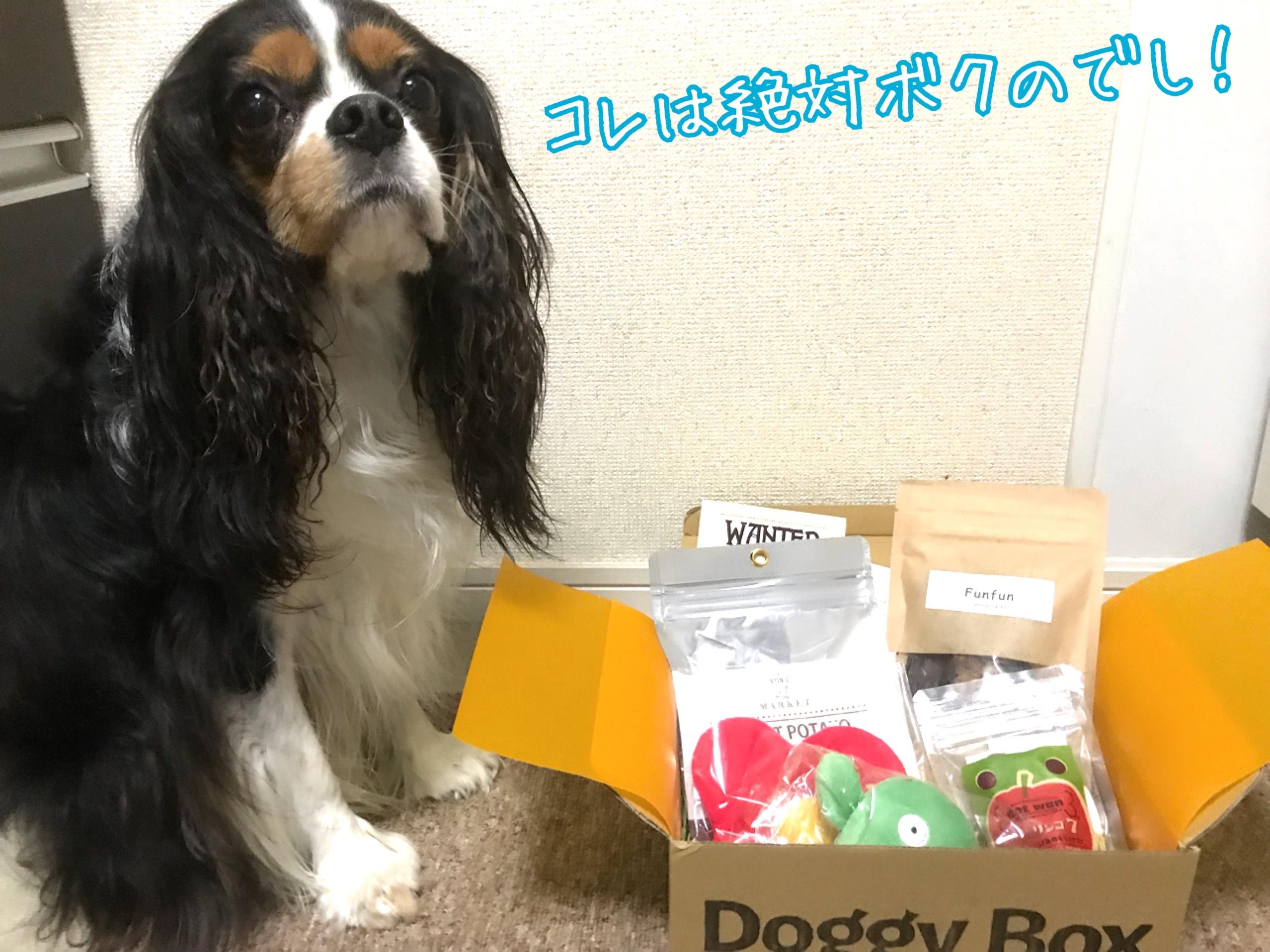 DoggyBox コレ絶対ボクのでし