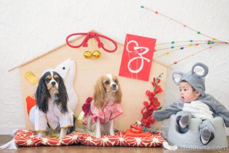 犬と赤ちゃん絵馬のお正月写真