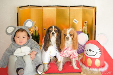 犬と赤ちゃん金屏風のお正月写真