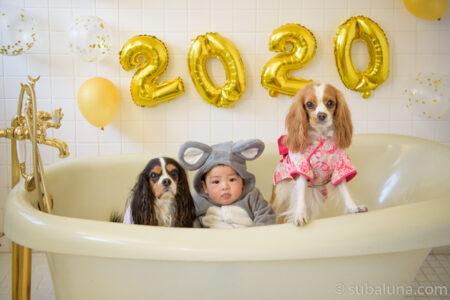 犬と赤ちゃんバスタブ写真