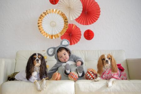 犬と赤ちゃん正月写真