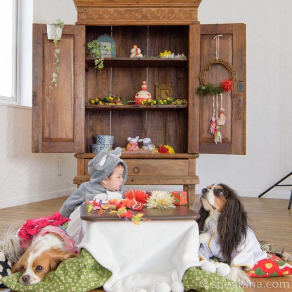 犬と赤ちゃん正月コタツ写真
