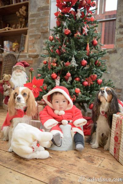 犬と赤ちゃんのクリスマス写真