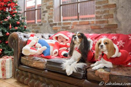 犬と赤ちゃんのサンタ写真
