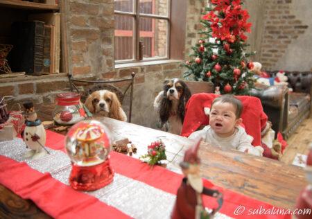 赤ちゃんと犬のサンタ写真