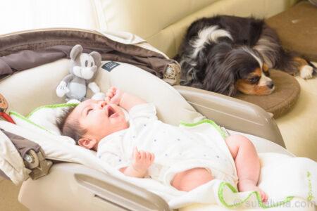 ハイローチェアでくつろぐ赤ちゃんと隣にいるキャバリアトライカラー