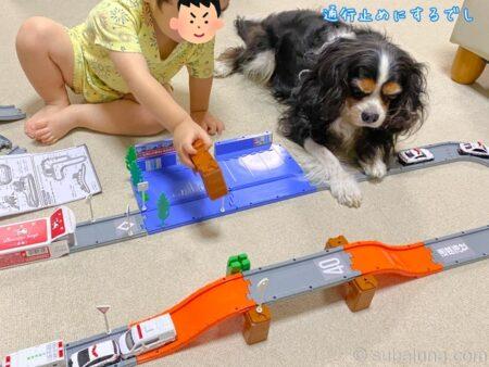 トミカで遊ぶ2歳児とキャバリアトライカラー。すばる「通行止めにするでし」