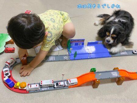トミカで遊ぶ2歳児とキャバリアトライカラー。すばる「次は何やるでしかね」