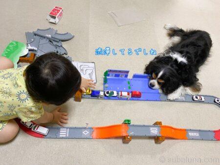 トミカで遊ぶ2歳児とキャバリアトライカラー。すばる「渋滞してるでしね」
