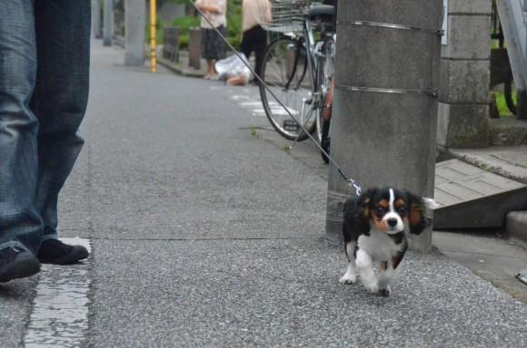 お散歩開始